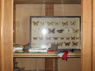 Musée scolaire : collection de papillons