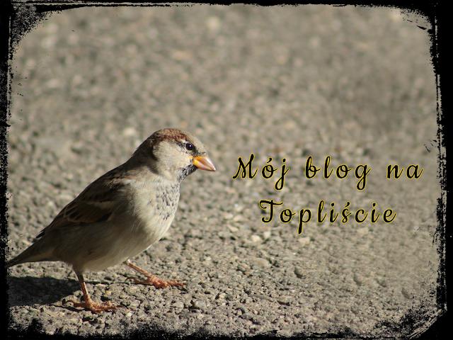 Relewantna - Blog na Topliście