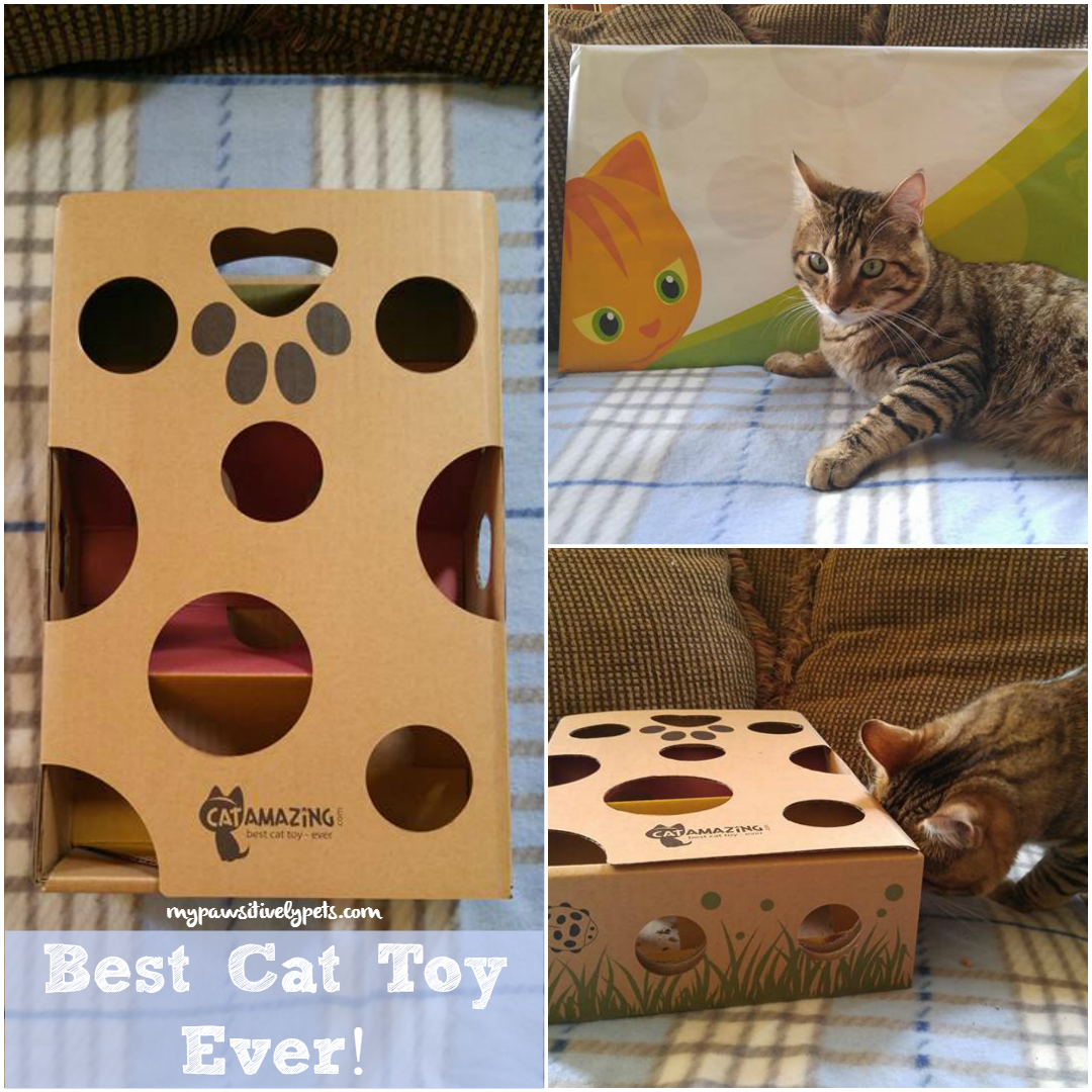 Best Toy Ever : Keep kitty stimulated with cat amazing best toy ever