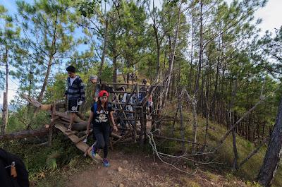 Cow Barricade Ampucao Itogon Benguet Cordillera Administrative Region Philippines
