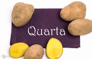 Kartoffel vorwiegend festkochend Quarta