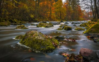 Wallpaper: River Nature Autumn Wood