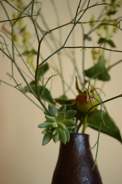 monday vase, small sunny garden, amy myers, desert garden,