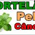 Benefícios do Chá de Hortelã para saúde e para Pele