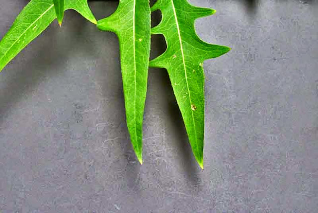 leaves, close-up, black background