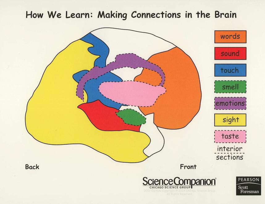 Our Class Blog The Human Brain