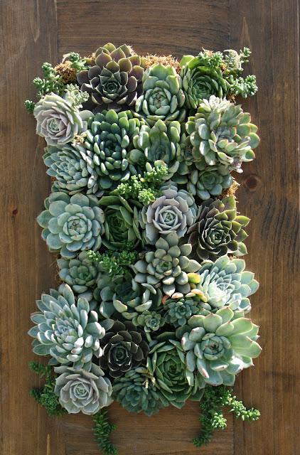 How to Grow an Easy Succulent Garden   31Daily.com