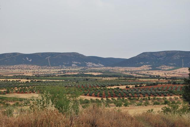 Vistas del Parque Natural de Cabañeros y los Quintos de Mora