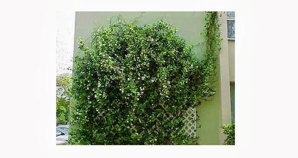 planta elegida para el fondo