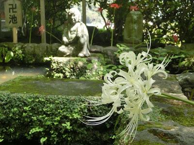 長谷寺のヒガンバナ
