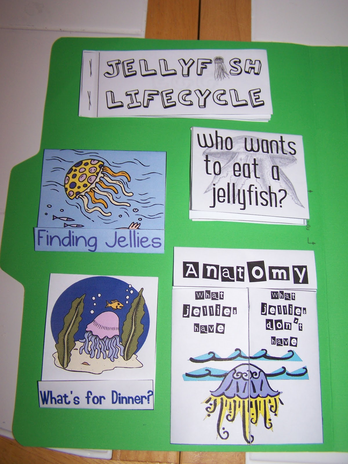 Walnut Hill Homeschool First Grade Reading Jellyfish Study