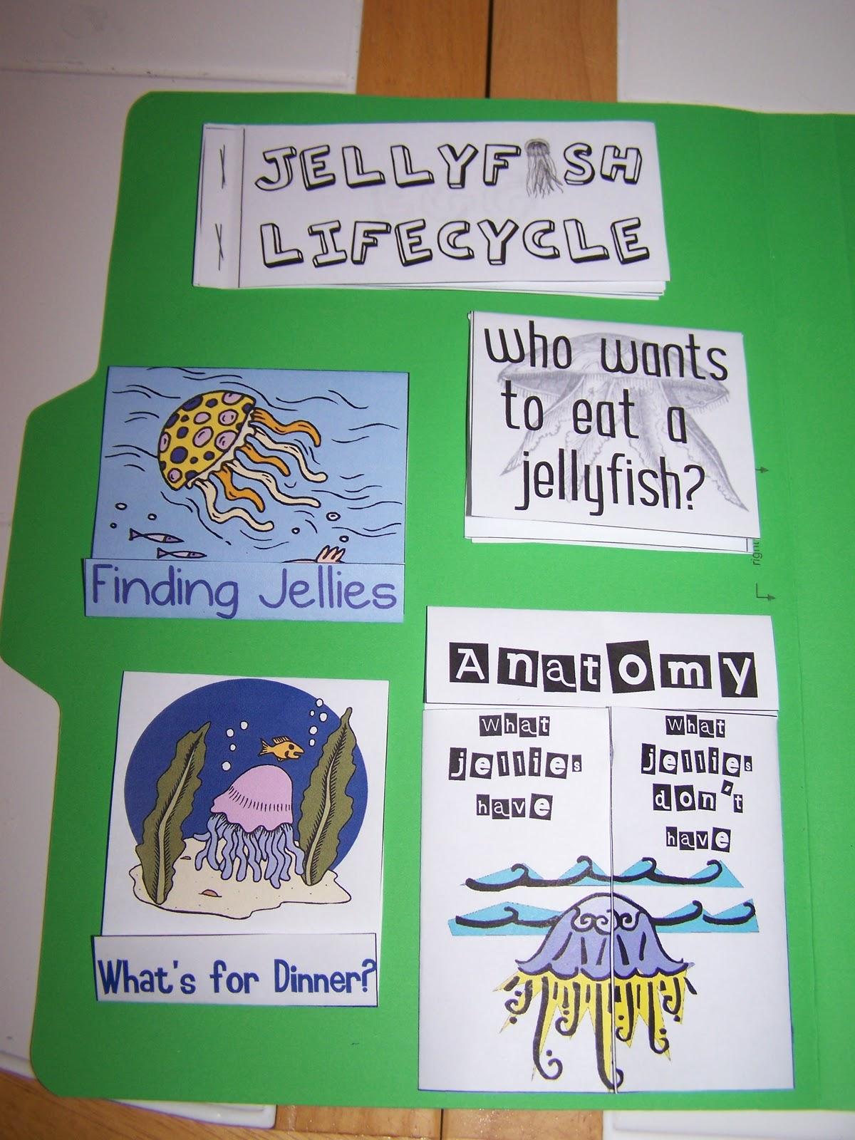Walnut Hill Homeschool First Grade Reading Jellyfish Study