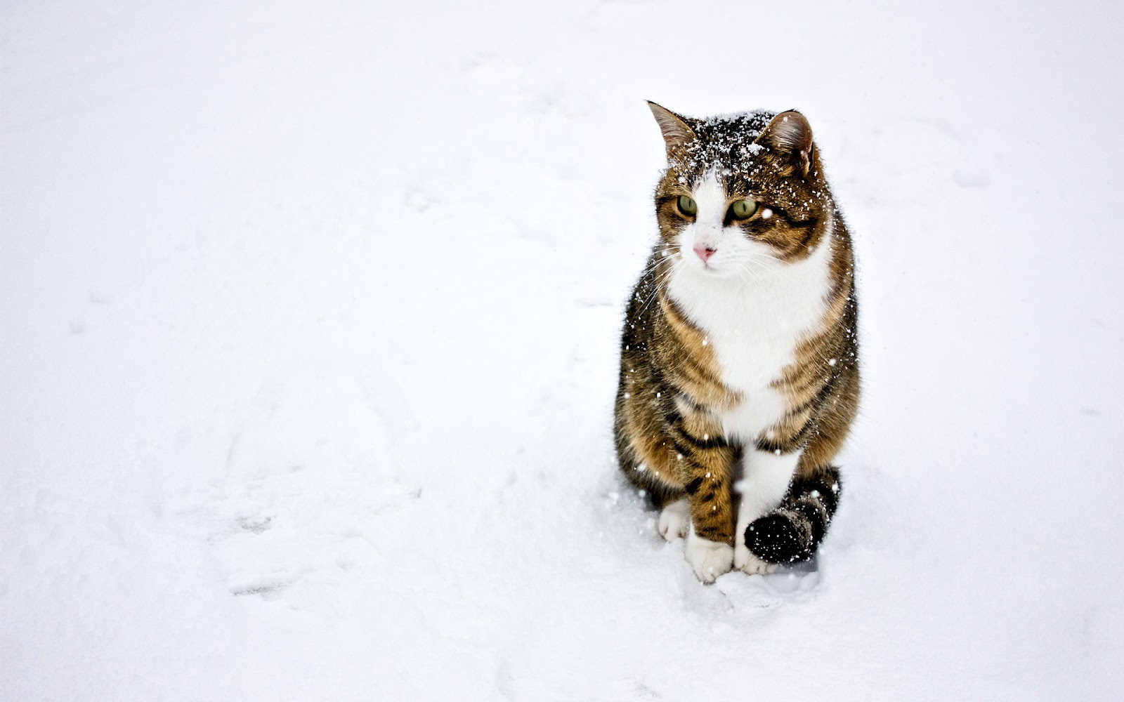 Puss In Boots Wallpaper Hd Proxecto Gato Cats Wallpapers By Bighdwallpapers