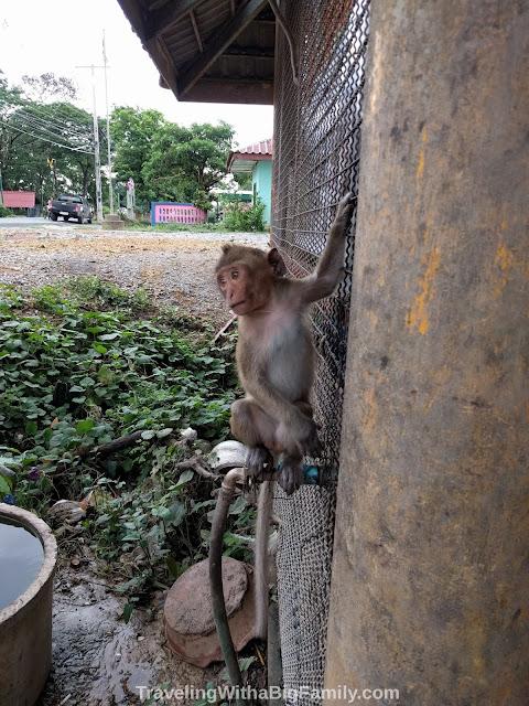 Ayutthaya, Thailand Monkey Sanctuary