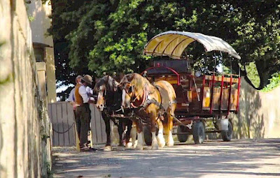 Horse and wagon excursion through Chianti, Tuscany