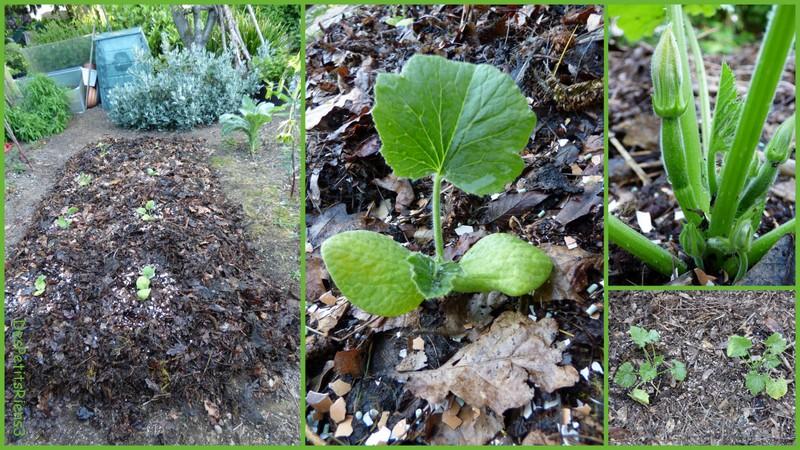 Despetitsriens3 conf rence jardinage - Quand ramasser les potimarrons ...