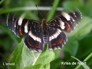 Envol du Papillon - Battement d'aile