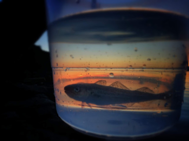 Schwarmbildung Fisbowl