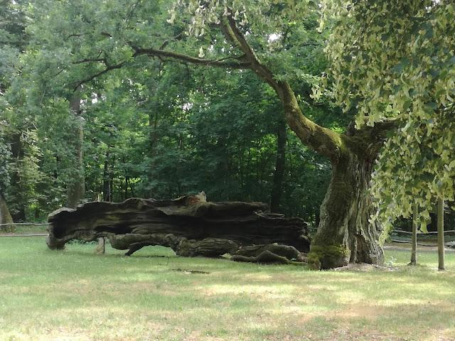 Park w Rogalinie