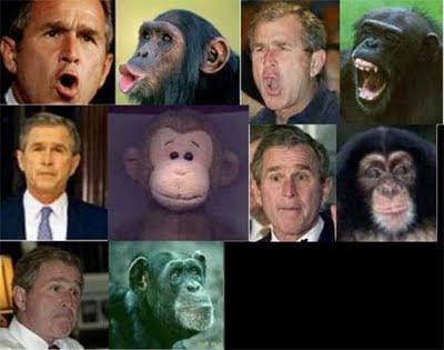 http://4.bp.blogspot.com/-gMfwokK_ceE/Tjw-HbhkmkI/AAAAAAAAAR8/aWW3gbJtHdM/s400/go-ape.jpg