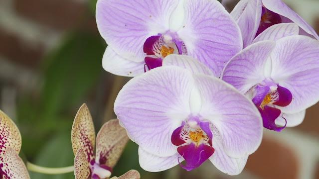 4 Dicas Simples para Cuidar de Orquídeas Facilmente