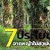 7 ประโยชน์ จากหญ้าในสวนปาล์ม