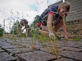cara murah menghilangkan rumput liar