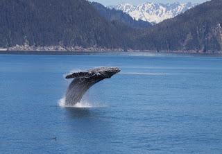 Prescott Travel Agent Alaska Cruise