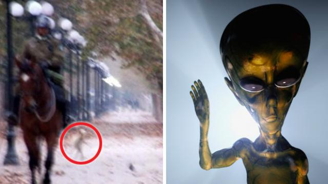 Bizarre Little 'Alien Creature' Caught Walking On A Park