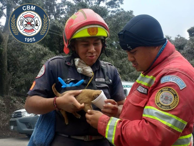 firemen offering puppy water after volcano rescue