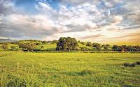 Geniş bir yeşillik alandan oluşan bir kır manzarası resmi