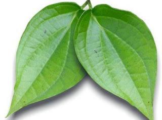 manfaat daun sirih menghilangkan wajah berminyak
