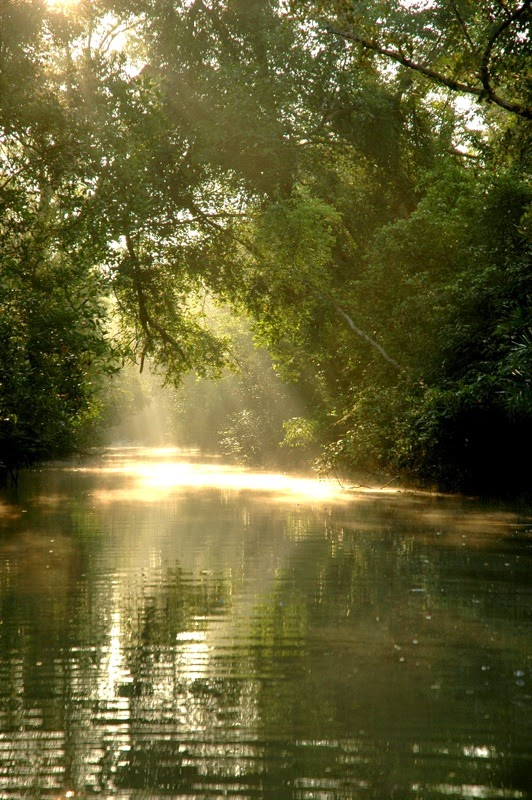 The Sundarbans 10 Worlds Amazing And Beautiful Forests