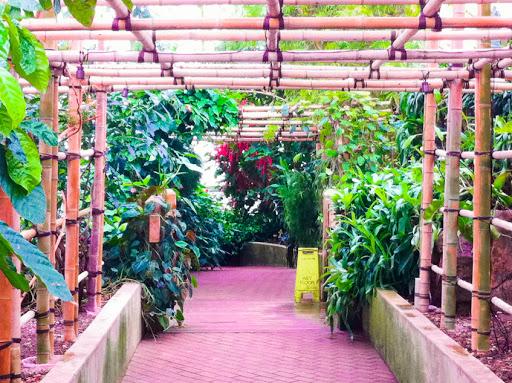 Bolz Conservatory at Olbrich Gardens Madison WI