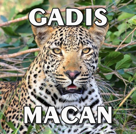 Gadis Macan
