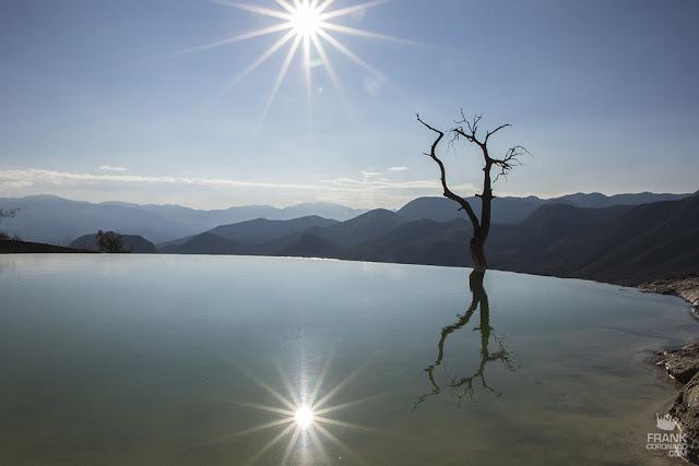 reflejo del arbol seco en hierve el agua oaxaca