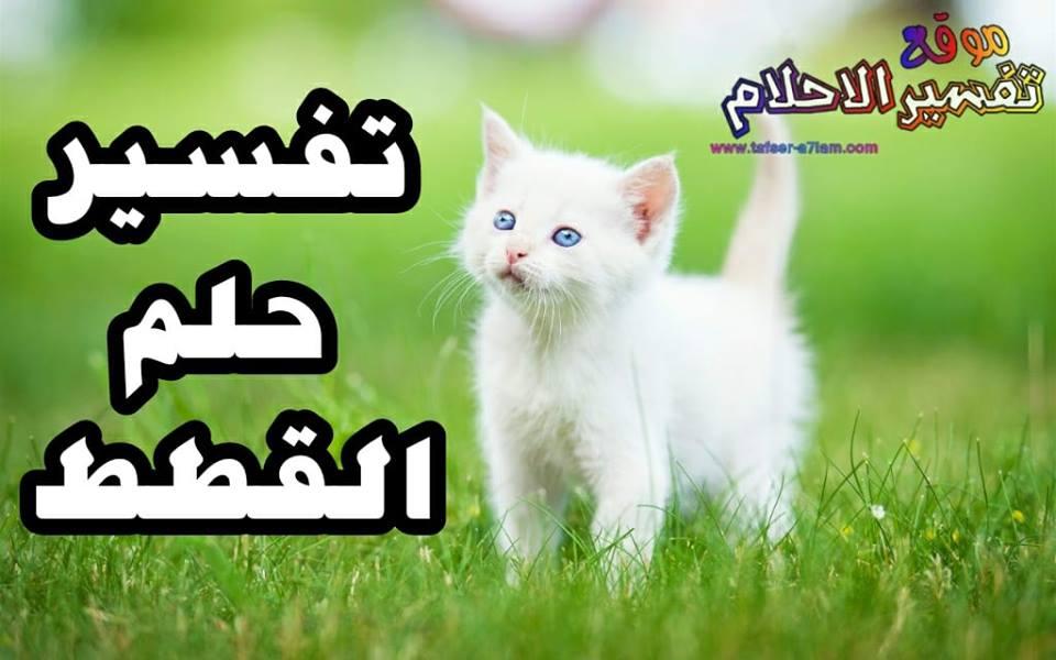 تفسير حلم القطط رؤية القطط في المنام