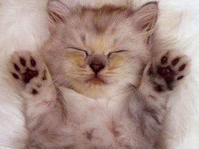 Bikin Ngakak 13 Tingkah Konyol Kucing-kucing Ini, Foto Terakhir Paling Gokil!