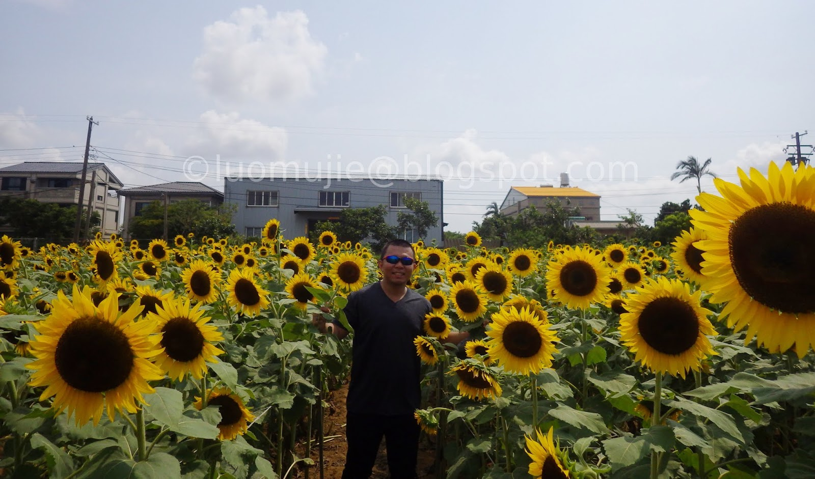 Taoyuan Sunflower Farm