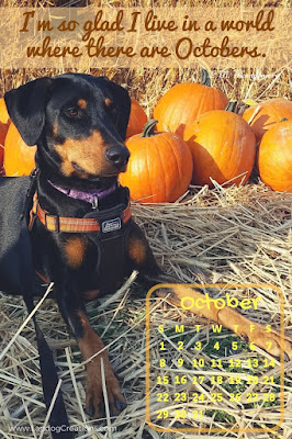 doberman rescue dog pumpkin patch october
