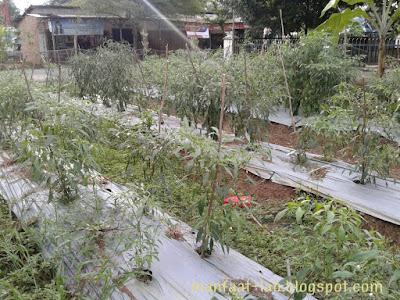 Memanfaatkan lahan sempit yang kosong