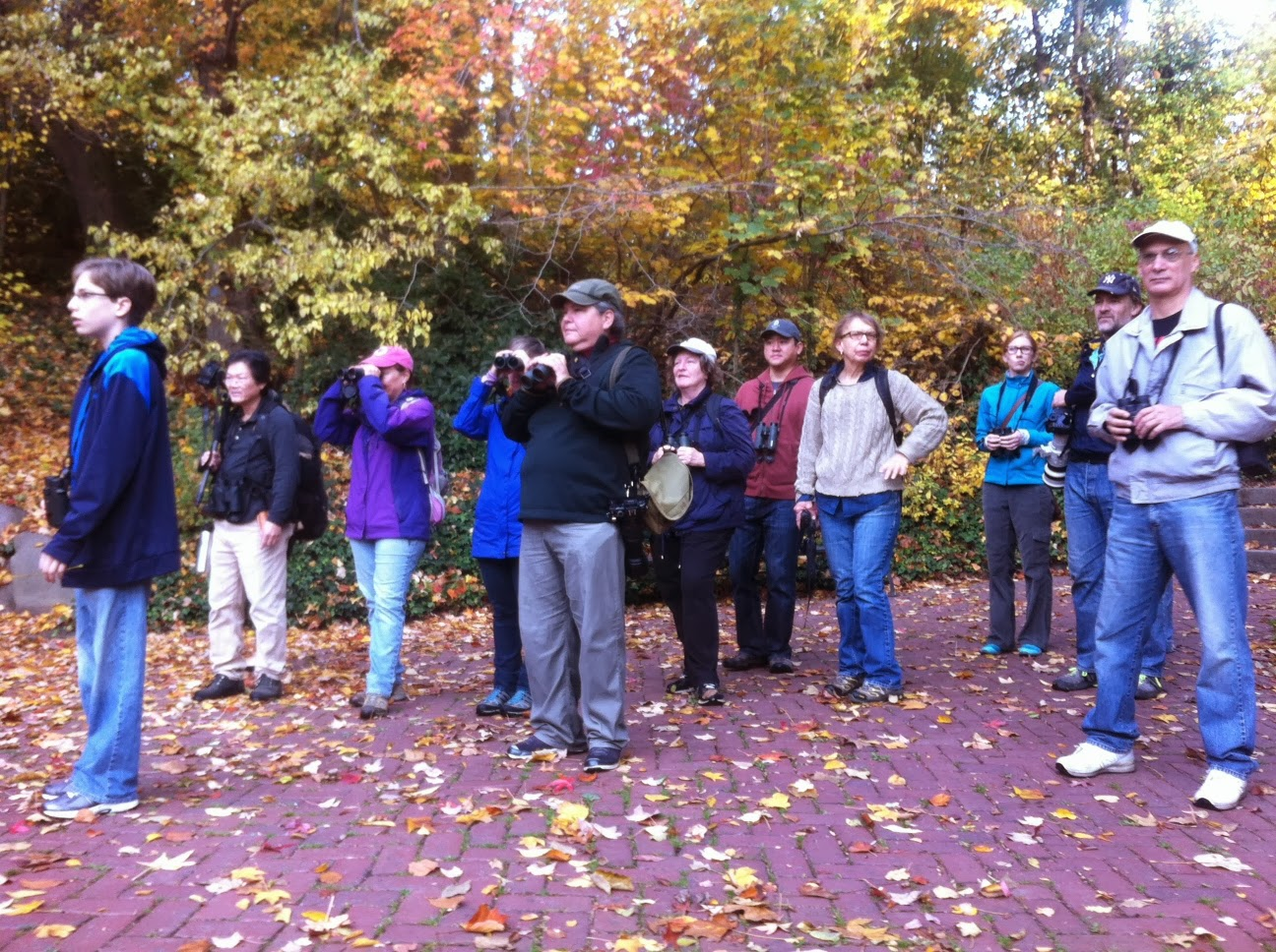 Brooklyn Bird Club Field Trip Reports November
