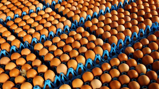 Huevos contaminados con un pesticida, un escándalo que sacude Europa