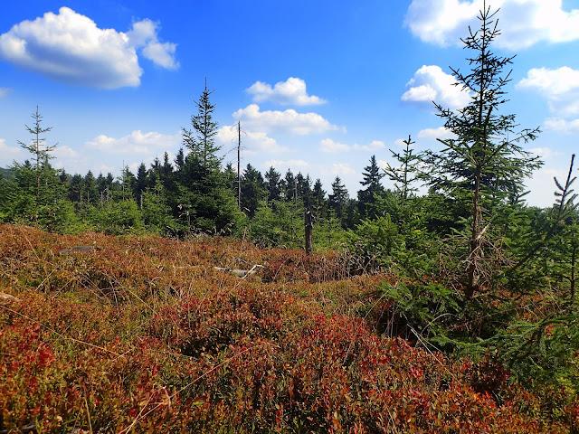Sudeckie borówki i lasy