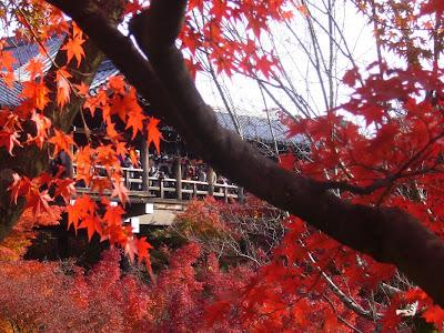 東福寺の紅葉〔絶景〕 通天橋