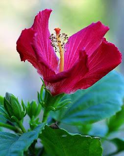 اجمل خلفيات زهور