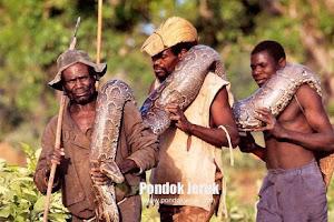 Anaconda 9