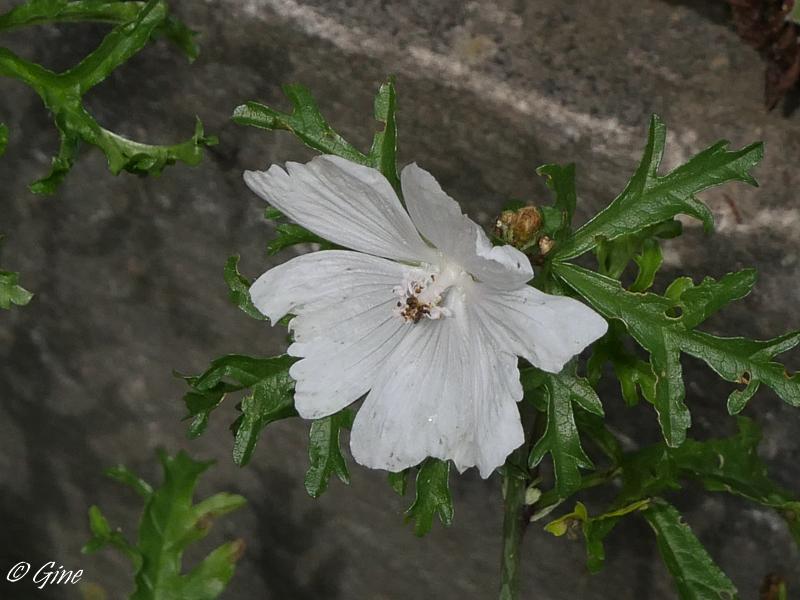 Au jardin de gine blanc blanc blanc for Ou trouver de la terre de jardin