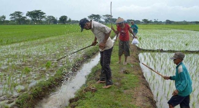 Subak merupakan sekumpulan petani di Bali yang mengelola sistem irigasi yang ada di sebuah Pokok Pikiran Teks Sistem Irigasi Subak