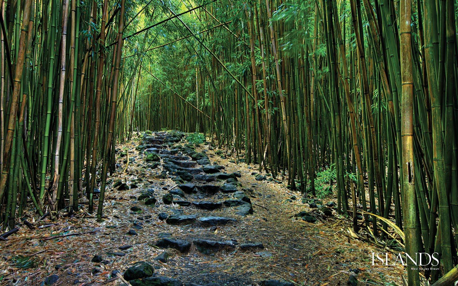 Foto Foto Hutan Tropis Lebat Dan Indah